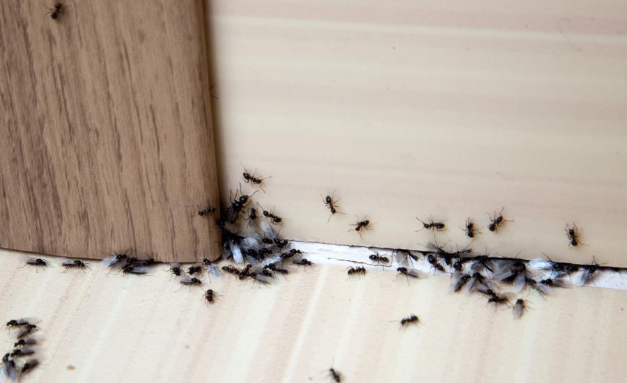 Formiche in camper: come risolvere il problema